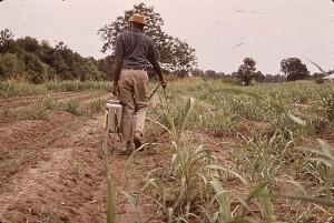 man hand spraying crops