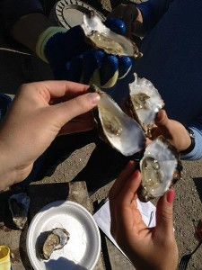 people handling open oysters
