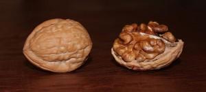 english walnuts in shell