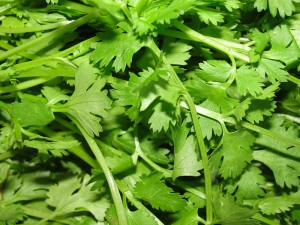 herb share - coriander