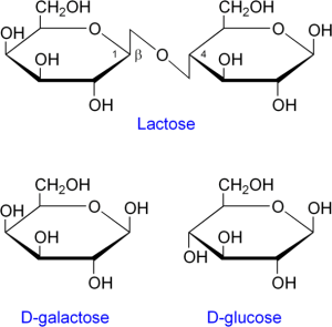 hydrolisis of lactose into glucose and galactase