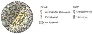 lipoprotein structure in German