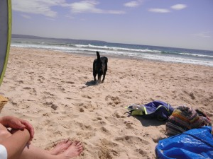 black dog on the sand with mum's legs and my stuff